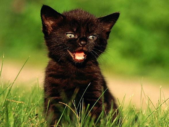 Коты с чёрными усами
